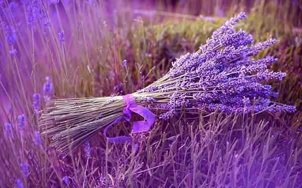 wallpaper-lavender-photo-02